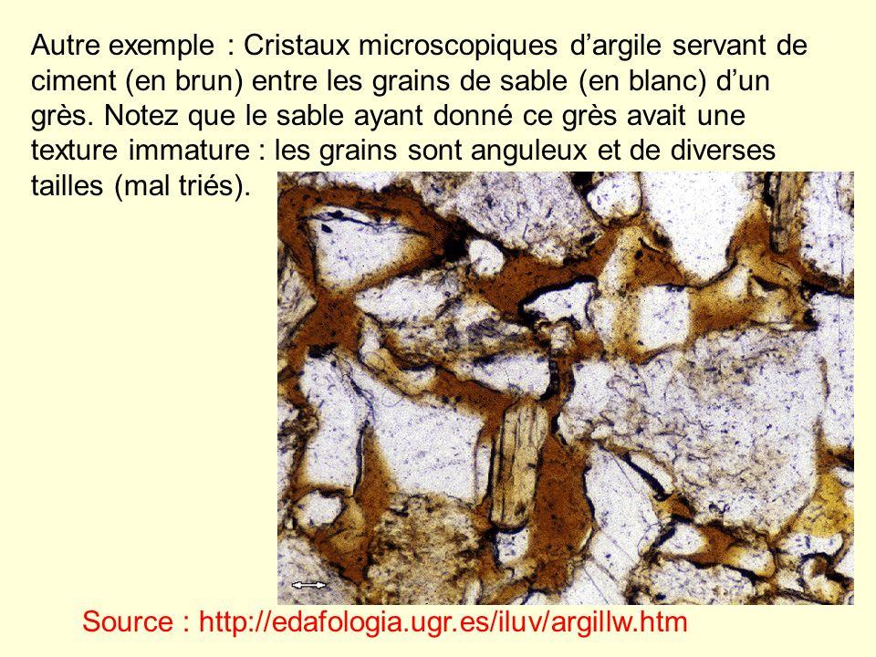 Autre exemple : Cristaux microscopiques d'argile servant de ciment (en brun) entre les grains de sable (en blanc) d'un grès. Notez que le sable ayant donné ce grès avait une texture immature : les grains sont anguleux et de diverses tailles (mal triés).