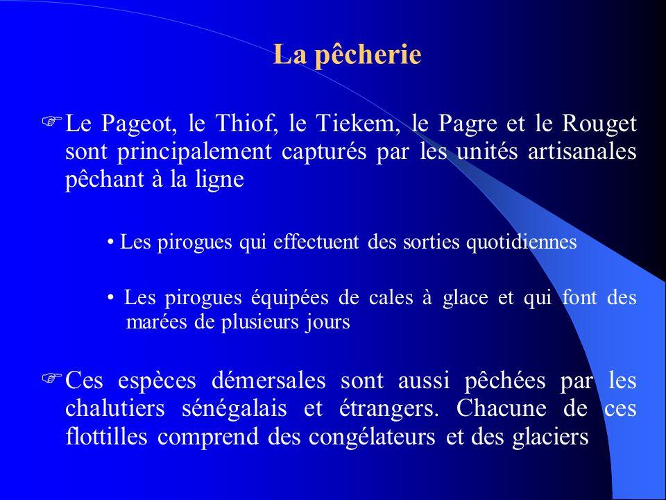 La pêcherie Le Pageot, le Thiof, le Tiekem, le Pagre et le Rouget sont principalement capturés par les unités artisanales pêchant à la ligne.