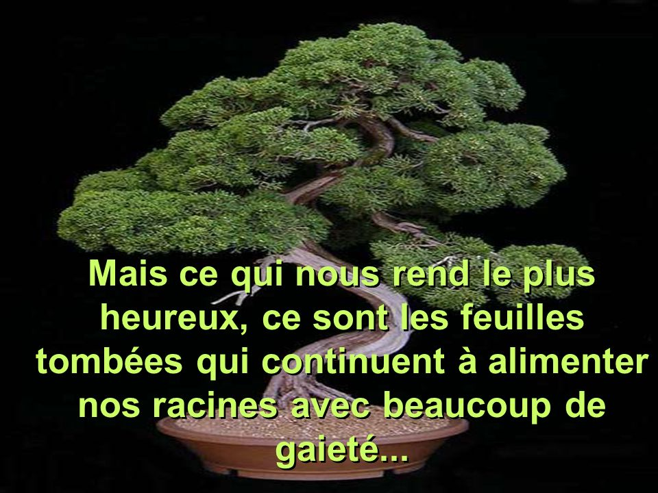 Mais ce qui nous rend le plus heureux, ce sont les feuilles tombées qui continuent à alimenter nos racines avec beaucoup de gaieté...