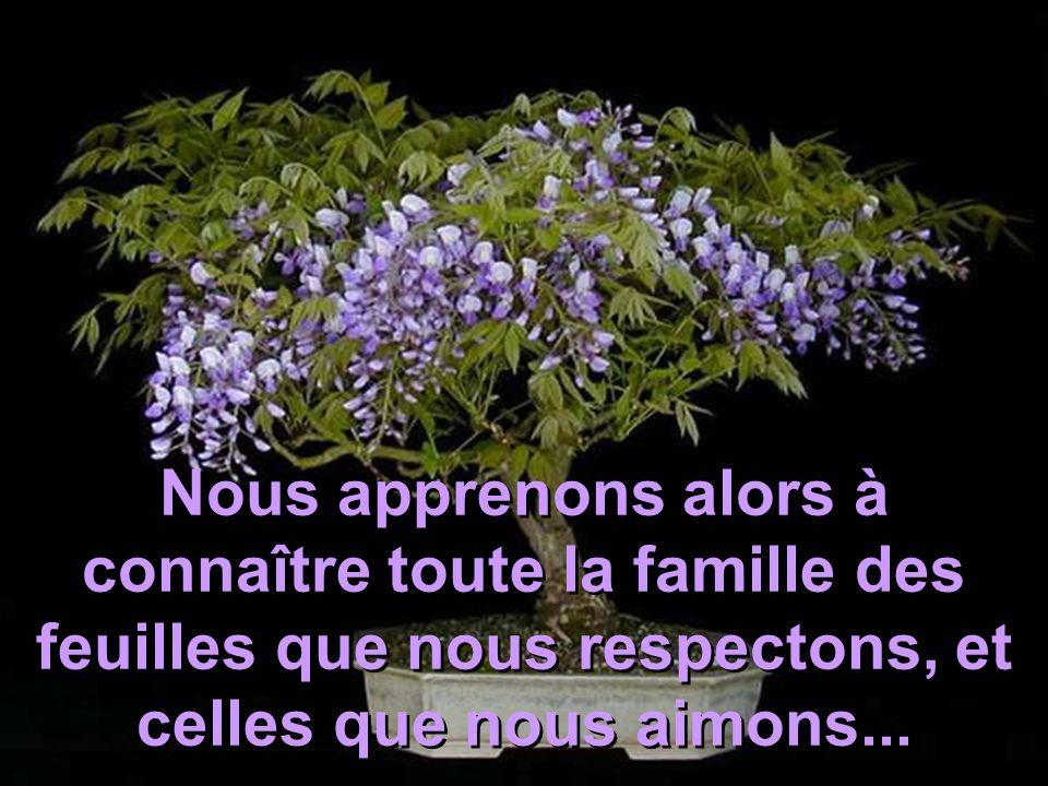 Nous apprenons alors à connaître toute la famille des feuilles que nous respectons, et celles que nous aimons...