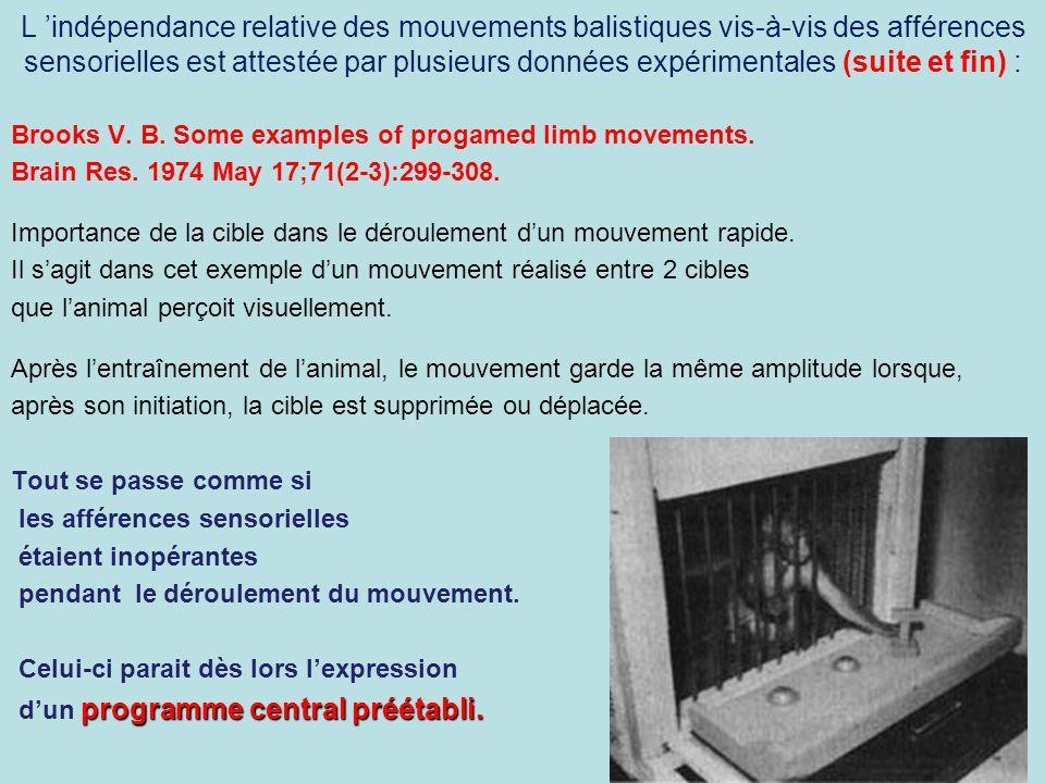 L 'indépendance relative des mouvements balistiques vis-à-vis des afférences sensorielles est attestée par plusieurs données expérimentales (suite et fin) :