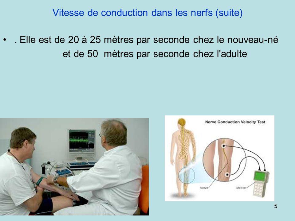 Vitesse de conduction dans les nerfs (suite)