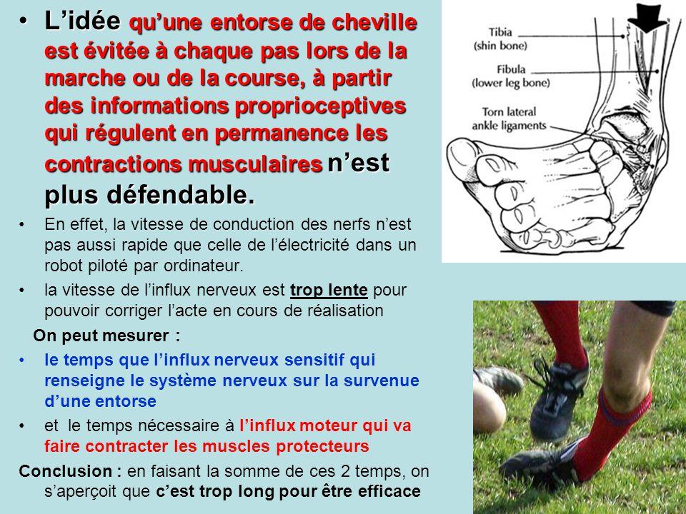 L'idée qu'une entorse de cheville est évitée à chaque pas lors de la marche ou de la course, à partir des informations proprioceptives qui régulent en permanence les contractions musculaires n'est plus défendable.