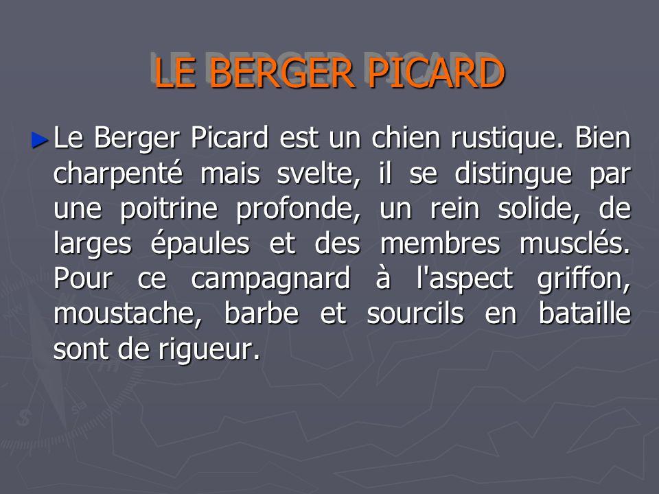 LE BERGER PICARD