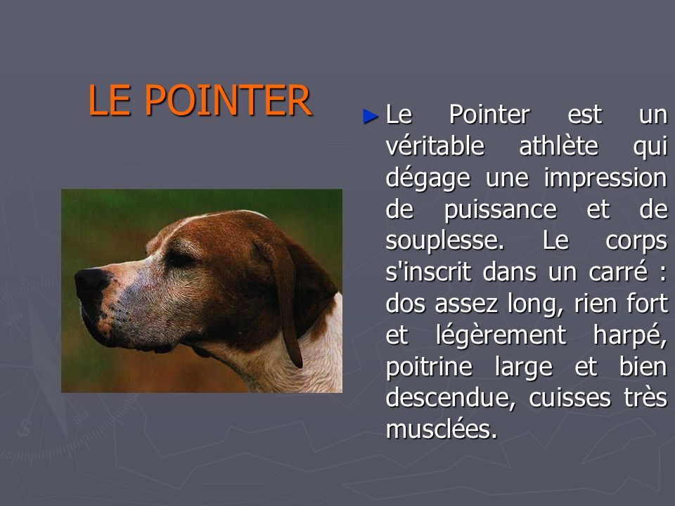 Catherine 31/03/2017. LE POINTER.