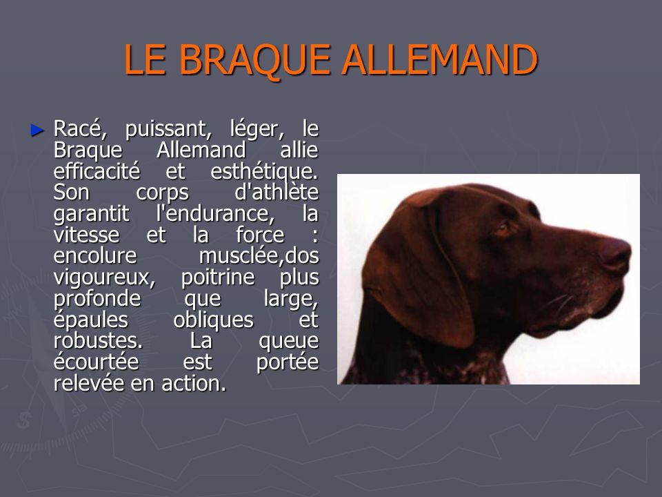 Catherine 31/03/2017. LE BRAQUE ALLEMAND.