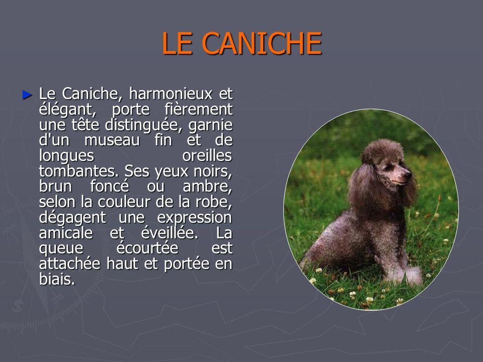 Catherine 31/03/2017. LE CANICHE.