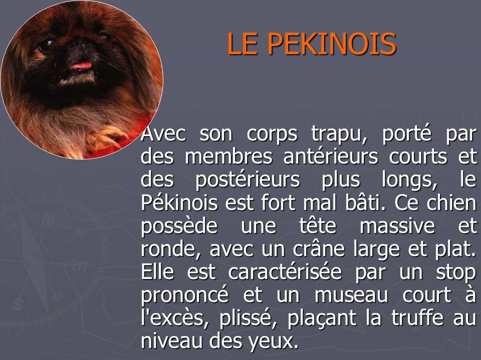 Catherine 31/03/2017. LE PEKINOIS.