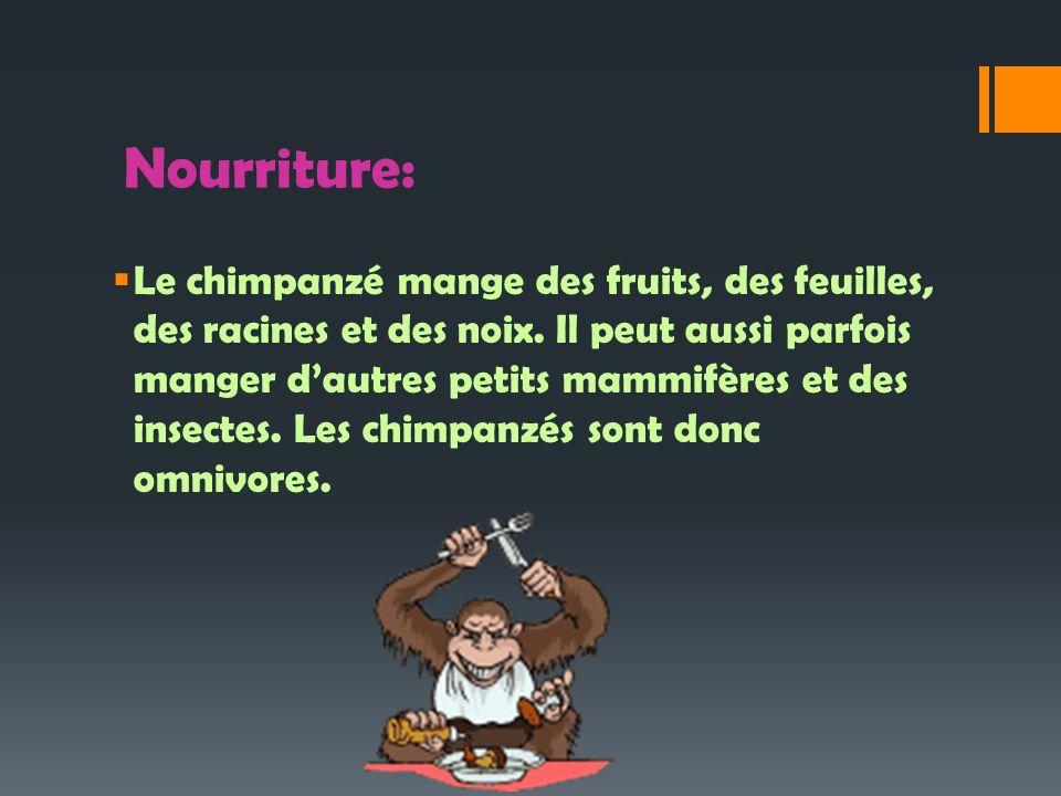 Nourriture: