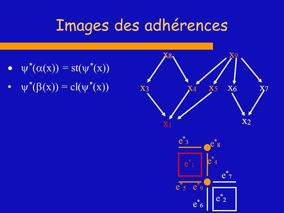 Images des adhérences x1 x2 x3 x4 x5 x6 x7 x8 x9 x1 x2 x3 x4 x5 x6 x7