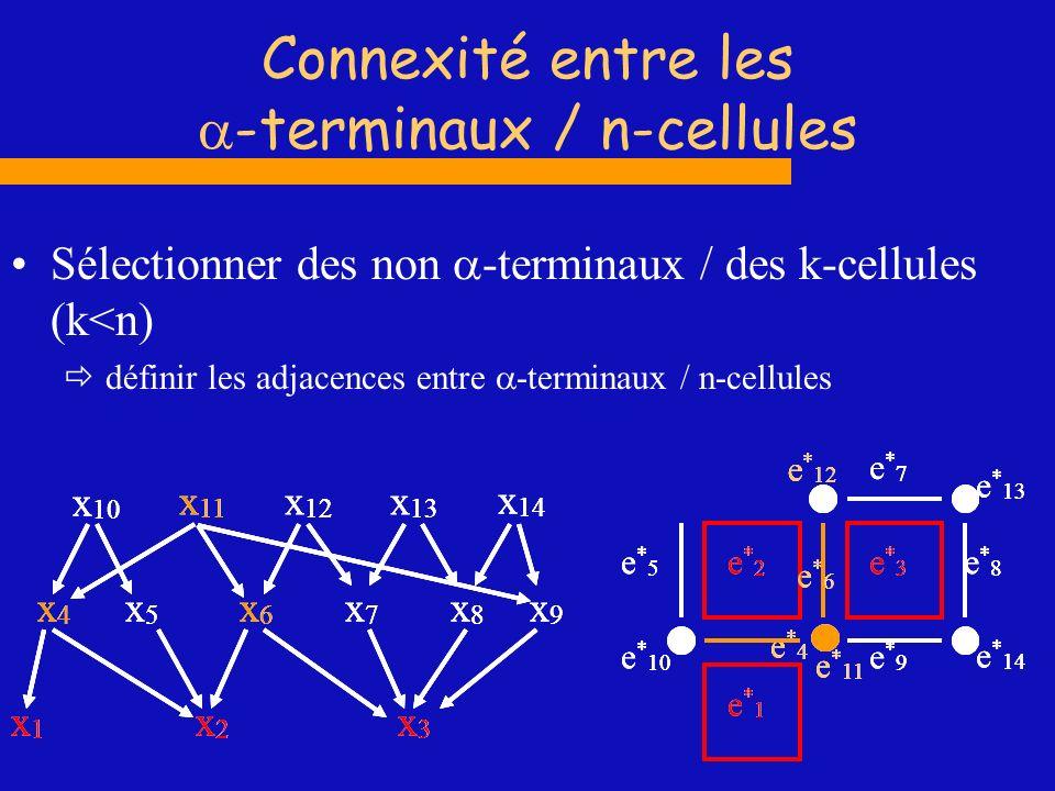 Connexité entre les -terminaux / n-cellules