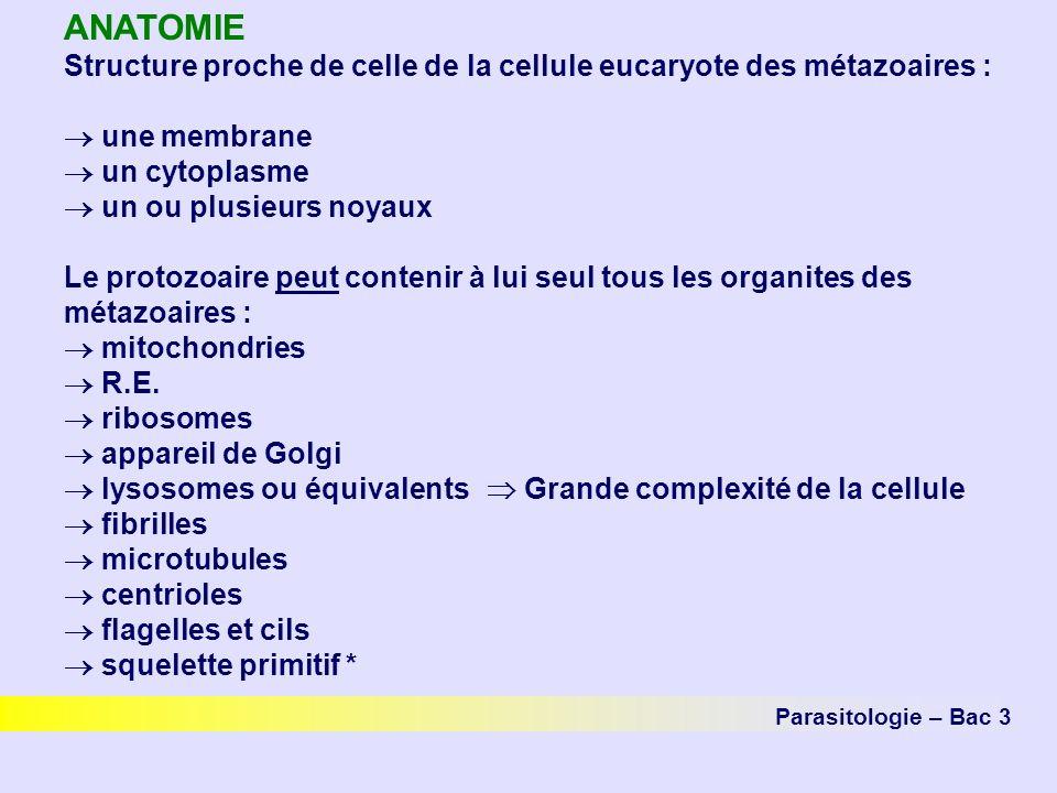 ANATOMIE Structure proche de celle de la cellule eucaryote des métazoaires :  une membrane.  un cytoplasme.