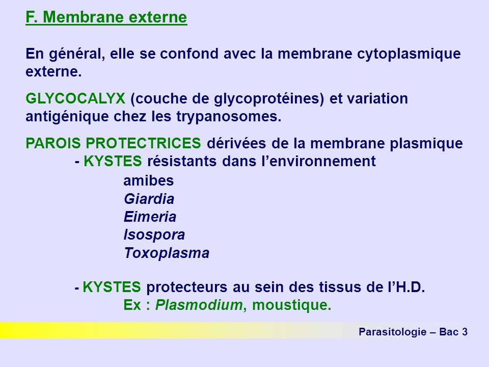 F. Membrane externe amibes