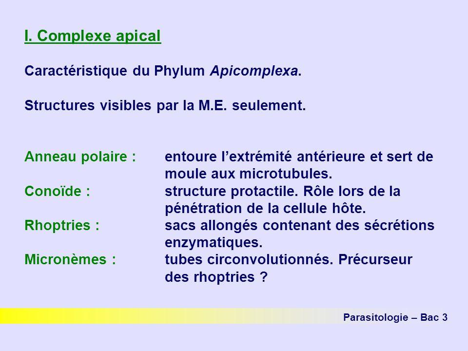 I. Complexe apical Caractéristique du Phylum Apicomplexa.