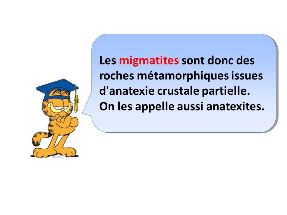 Les migmatites sont donc des roches métamorphiques issues d anatexie crustale partielle.