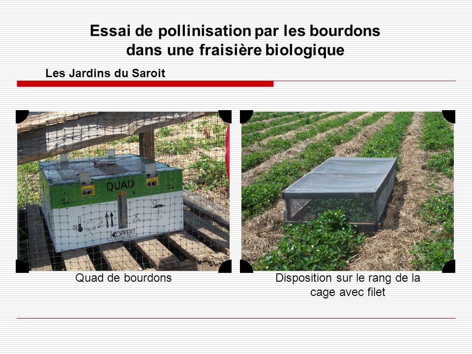 Essai de pollinisation par les bourdons dans une fraisière biologique