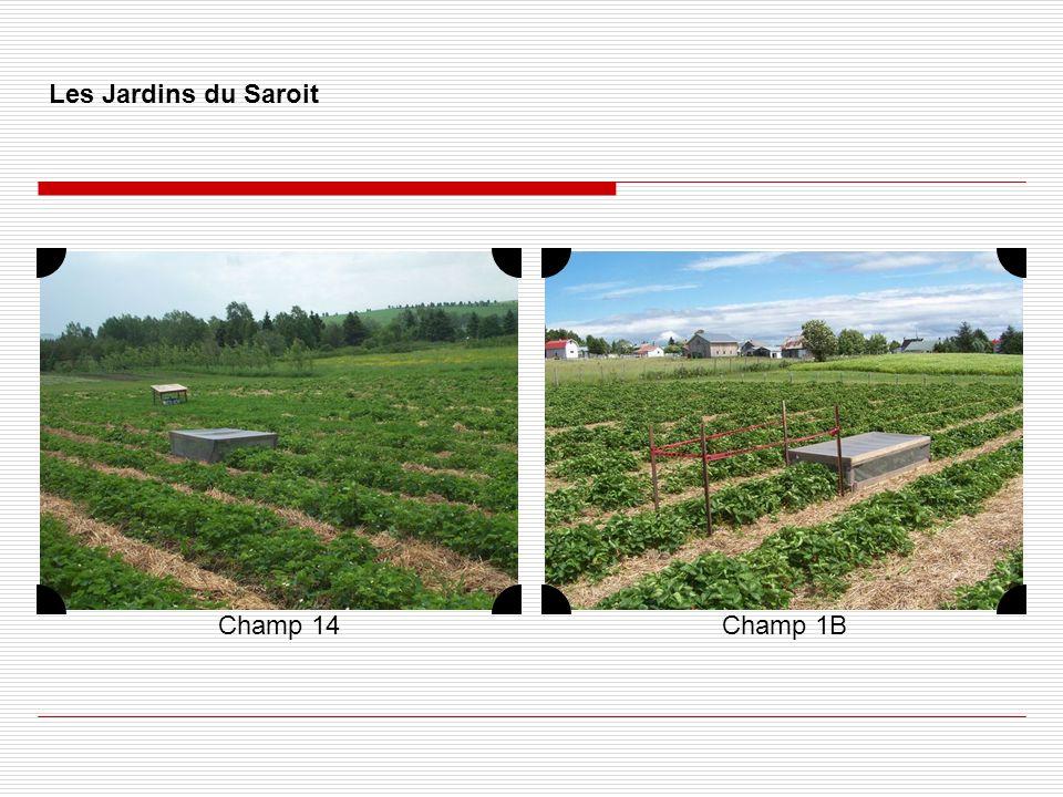 Les Jardins du Saroit Champ 14 Champ 1B