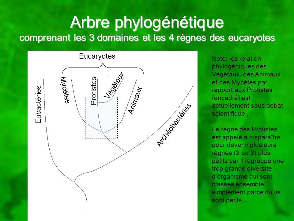 Arbre phylogénétique comprenant les 3 domaines et les 4 règnes des eucaryotes