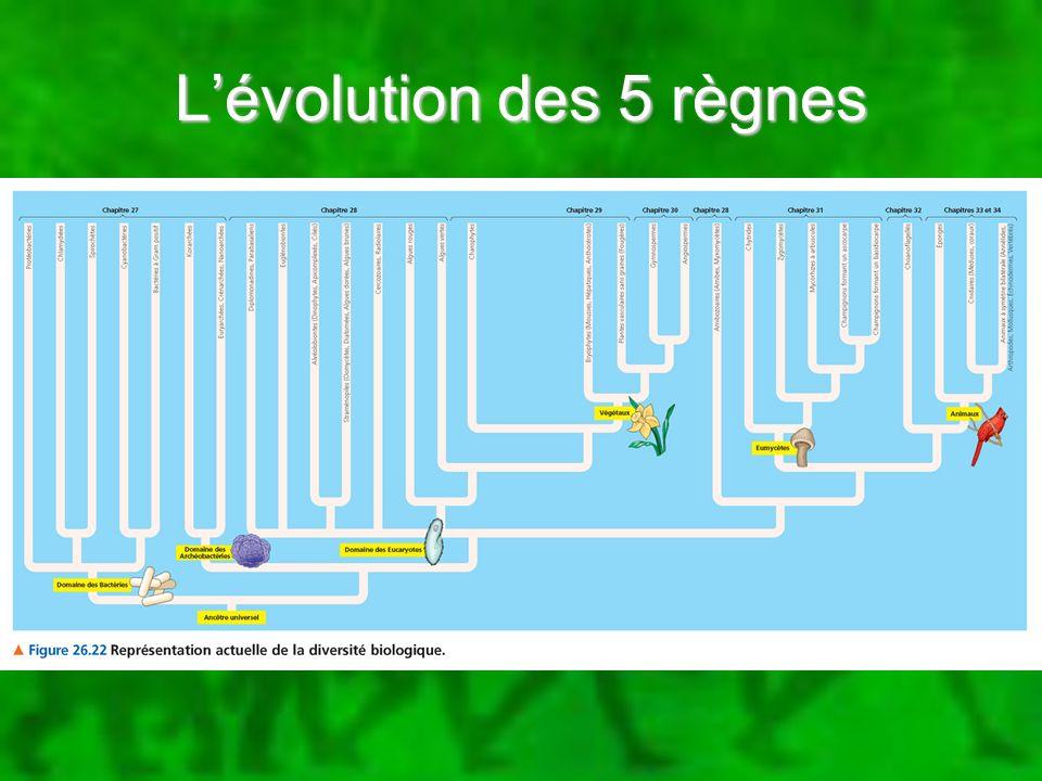 L'évolution des 5 règnes