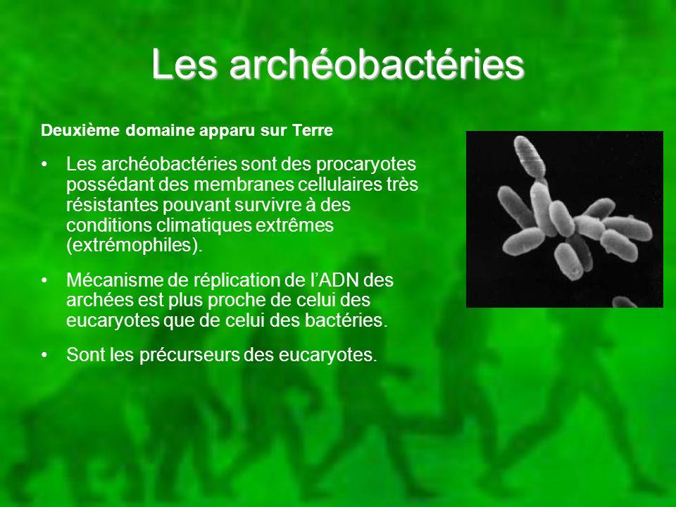 Les archéobactéries Deuxième domaine apparu sur Terre.