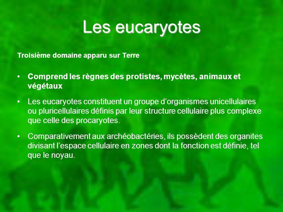 Les eucaryotes Troisième domaine apparu sur Terre. Comprend les règnes des protistes, mycètes, animaux et végétaux.