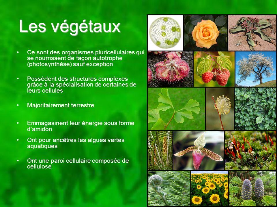 Les végétaux Ce sont des organismes pluricellulaires qui se nourrissent de façon autotrophe (photosynthèse) sauf exception.