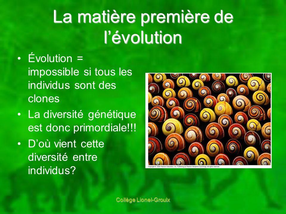 La matière première de l'évolution