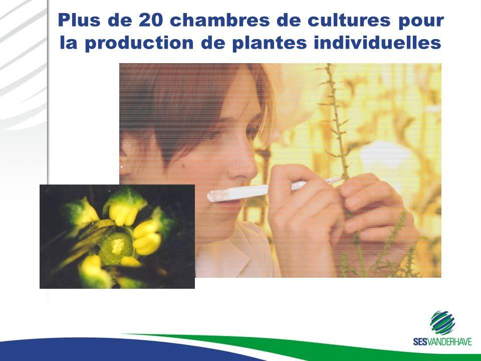Plus de 20 chambres de cultures pour la production de plantes individuelles