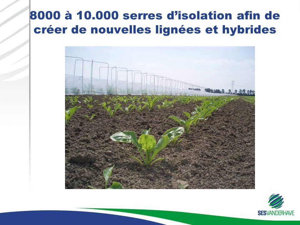 8000 à 10.000 serres d'isolation afin de créer de nouvelles lignées et hybrides