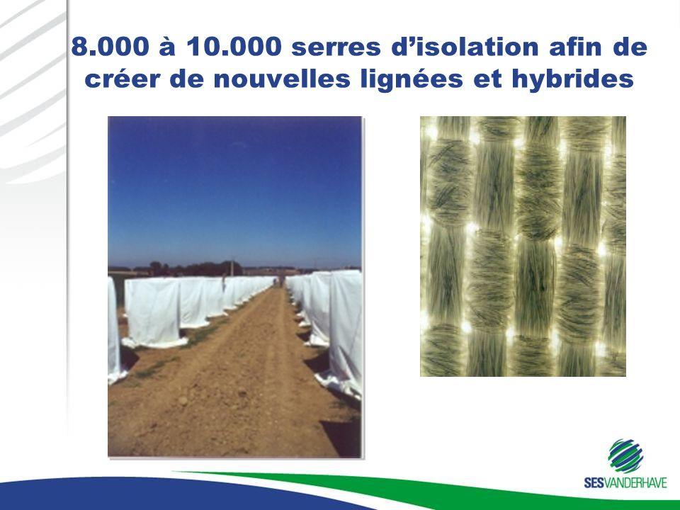 8.000 à 10.000 serres d'isolation afin de créer de nouvelles lignées et hybrides