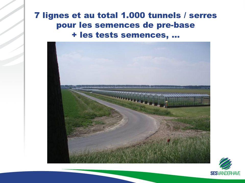 7 lignes et au total 1.000 tunnels / serres pour les semences de pre-base + les tests semences, …