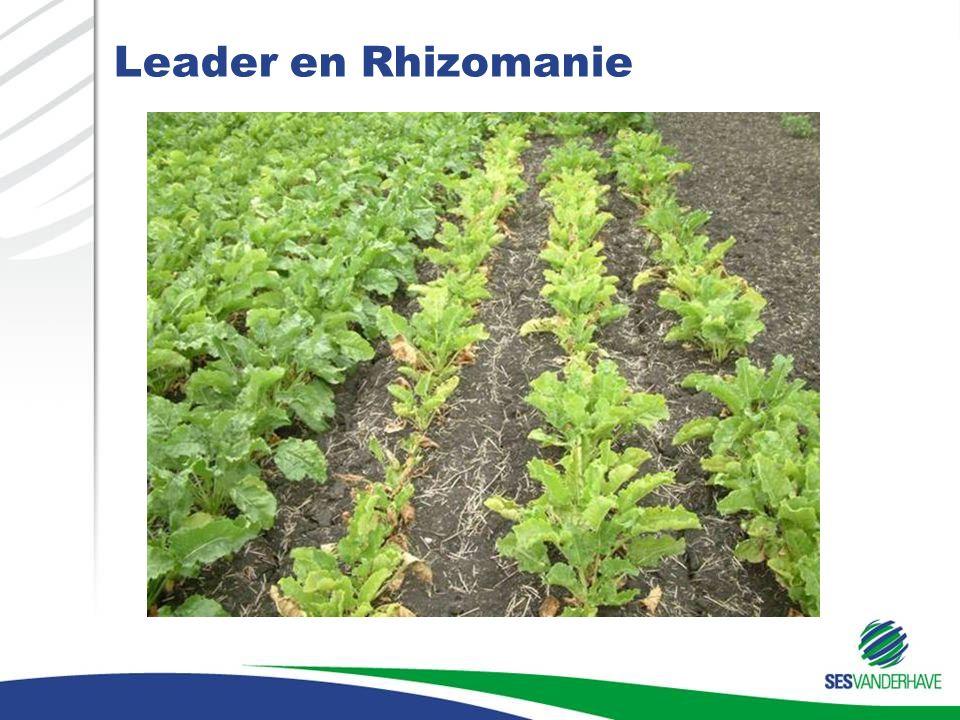 Leader en Rhizomanie