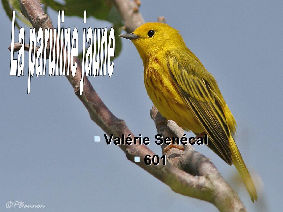 La paruline jaune Valérie Senécal 601