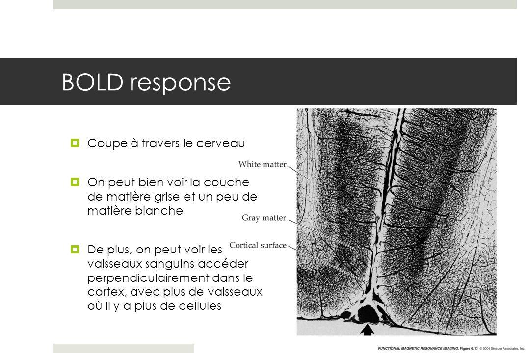 BOLD response Coupe à travers le cerveau