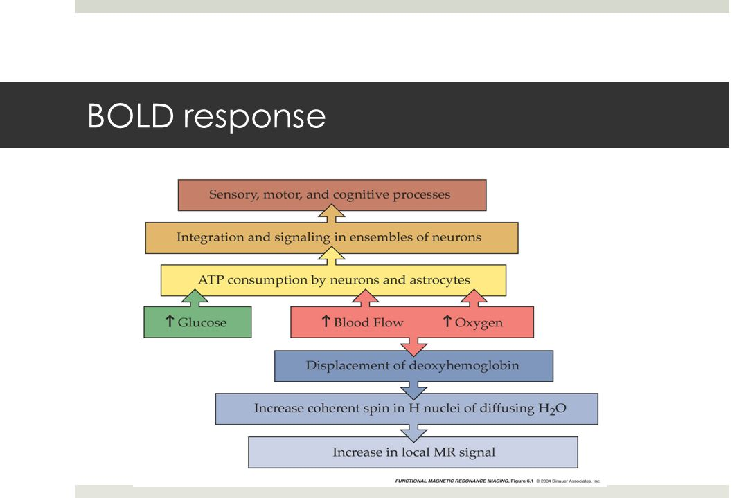 BOLD response fmri-fig-06-01-0.jpg