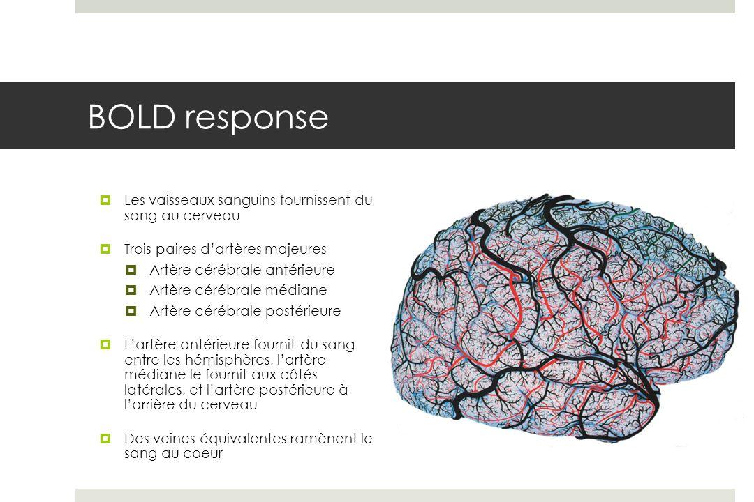 BOLD response Les vaisseaux sanguins fournissent du sang au cerveau