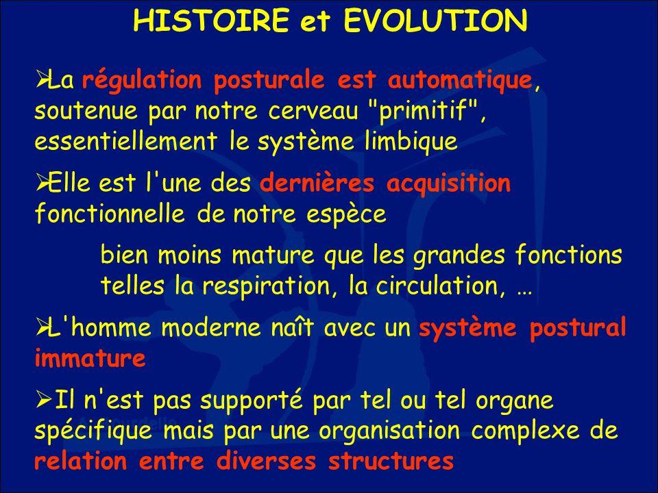 HISTOIRE et EVOLUTION La régulation posturale est automatique, soutenue par notre cerveau primitif , essentiellement le système limbique.