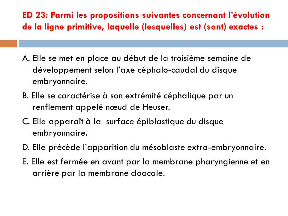 ED 23: Parmi les propositions suivantes concernant l'évolution de la ligne primitive, laquelle (lesquelles) est (sont) exactes :