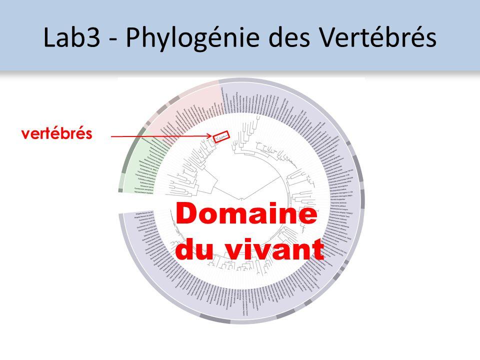 Lab3 - Phylogénie des Vertébrés