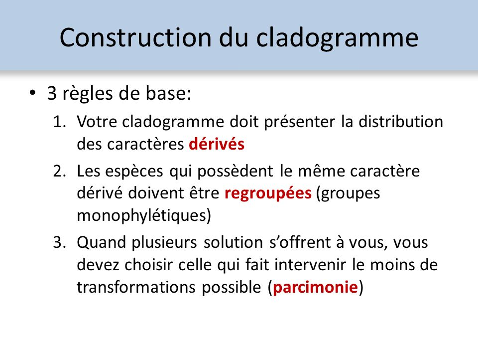 Construction du cladogramme