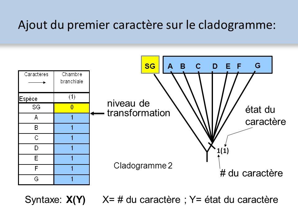 Ajout du premier caractère sur le cladogramme: