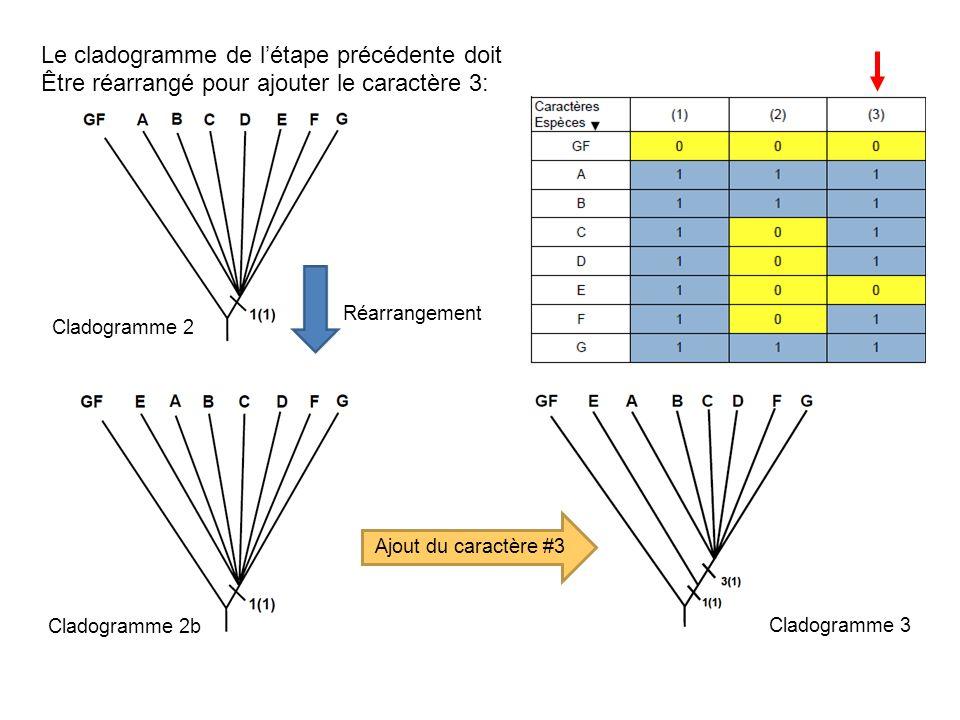 Le cladogramme de l'étape précédente doit