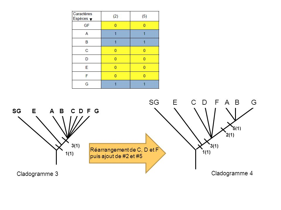 SG E C D F A B G SG E A B C D F G Cladogramme 3 Cladogramme 4