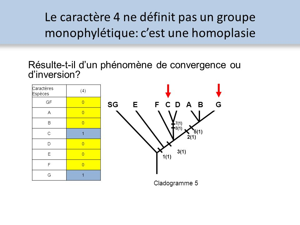 Le caractère 4 ne définit pas un groupe monophylétique: c'est une homoplasie