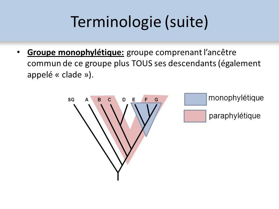 Terminologie (suite) Groupe monophylétique: groupe comprenant l'ancêtre commun de ce groupe plus TOUS ses descendants (également appelé « clade »).