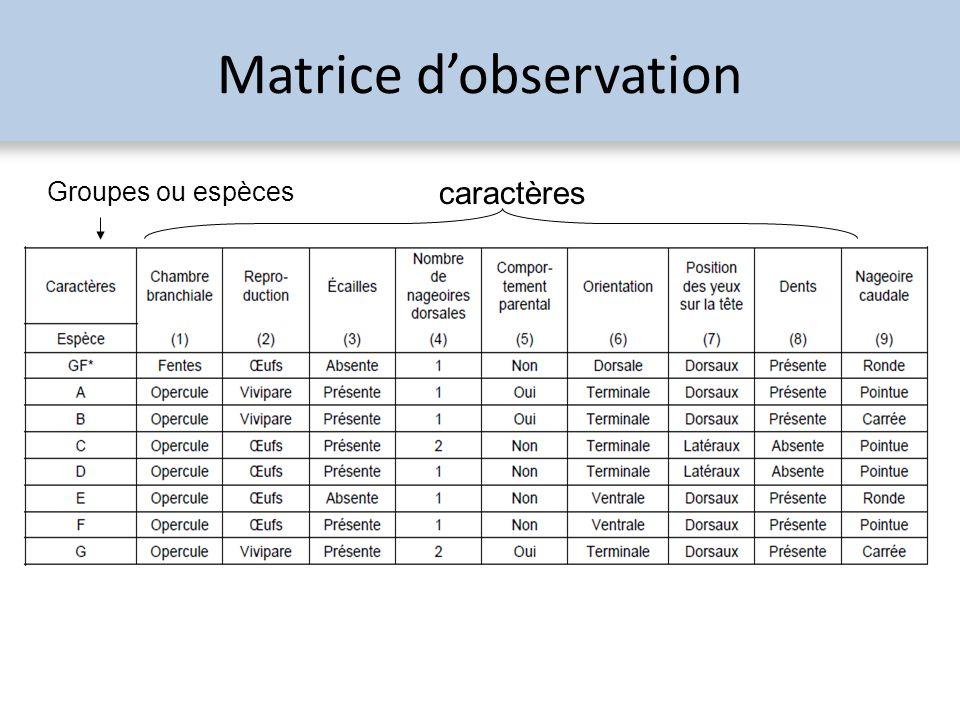 Matrice d'observation