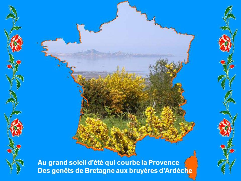 Au grand soleil d été qui courbe la Provence Des genêts de Bretagne aux bruyères d Ardèche
