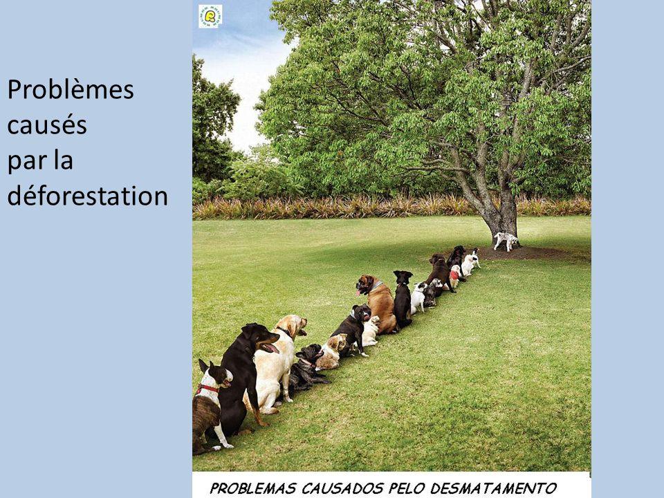 Problèmes causés par la déforestation