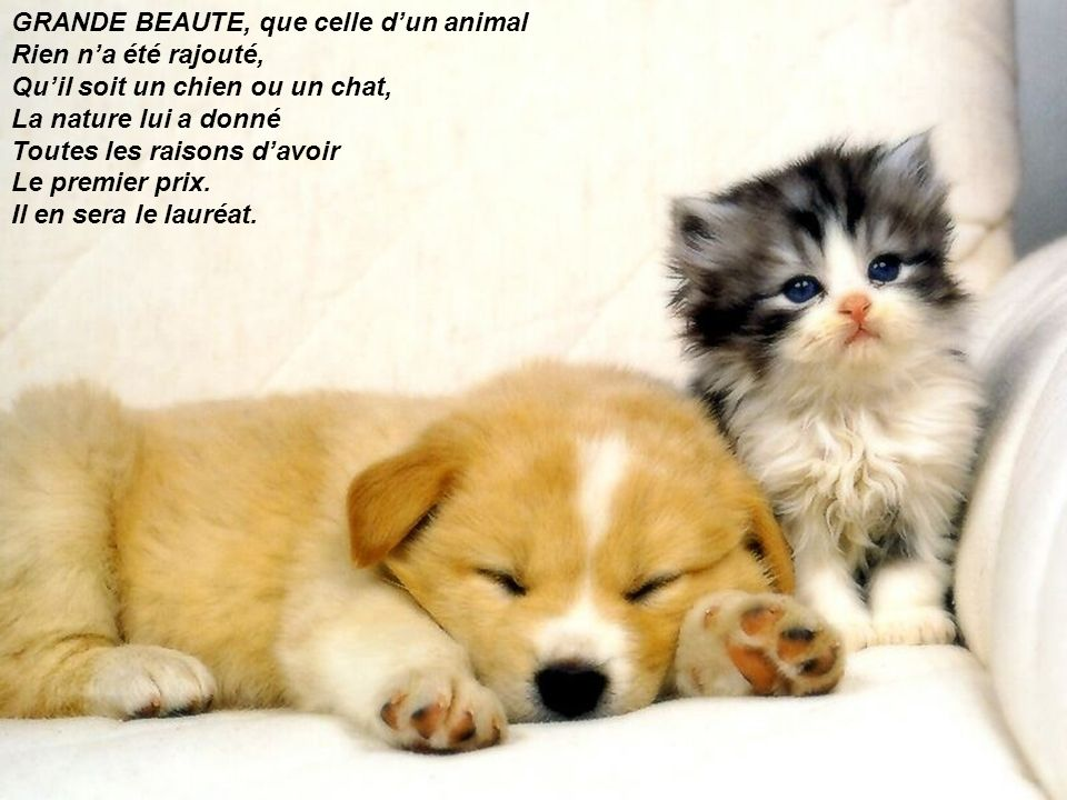 GRANDE BEAUTE, que celle d'un animal