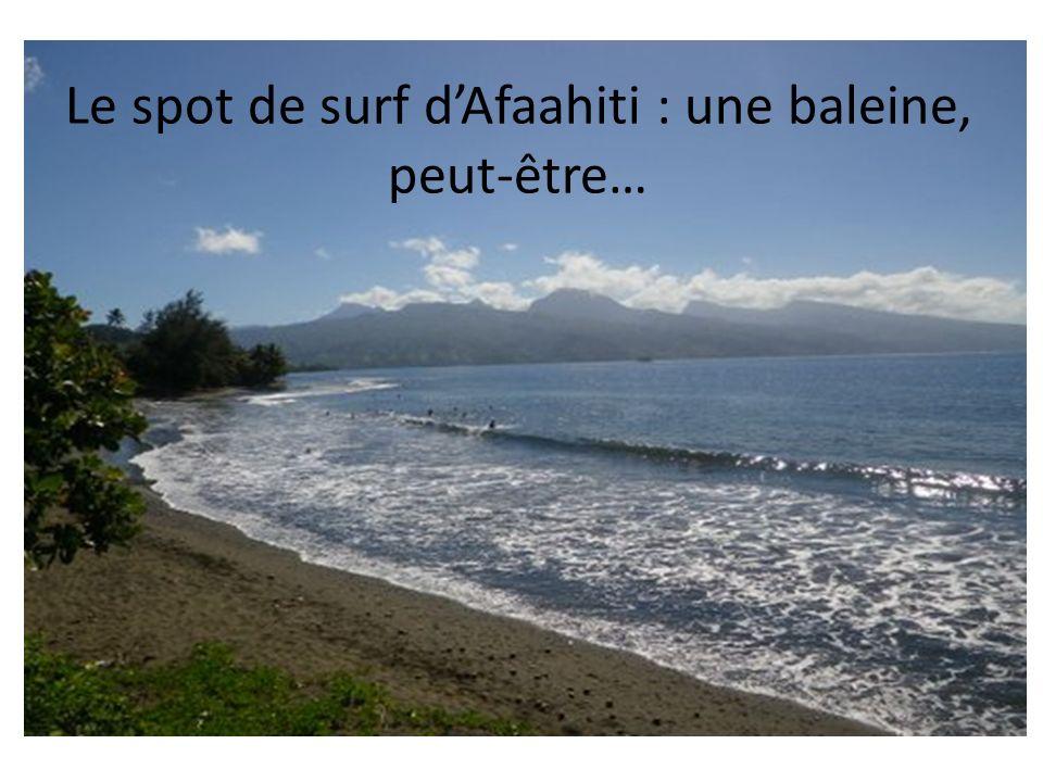 Le spot de surf d'Afaahiti : une baleine, peut-être…